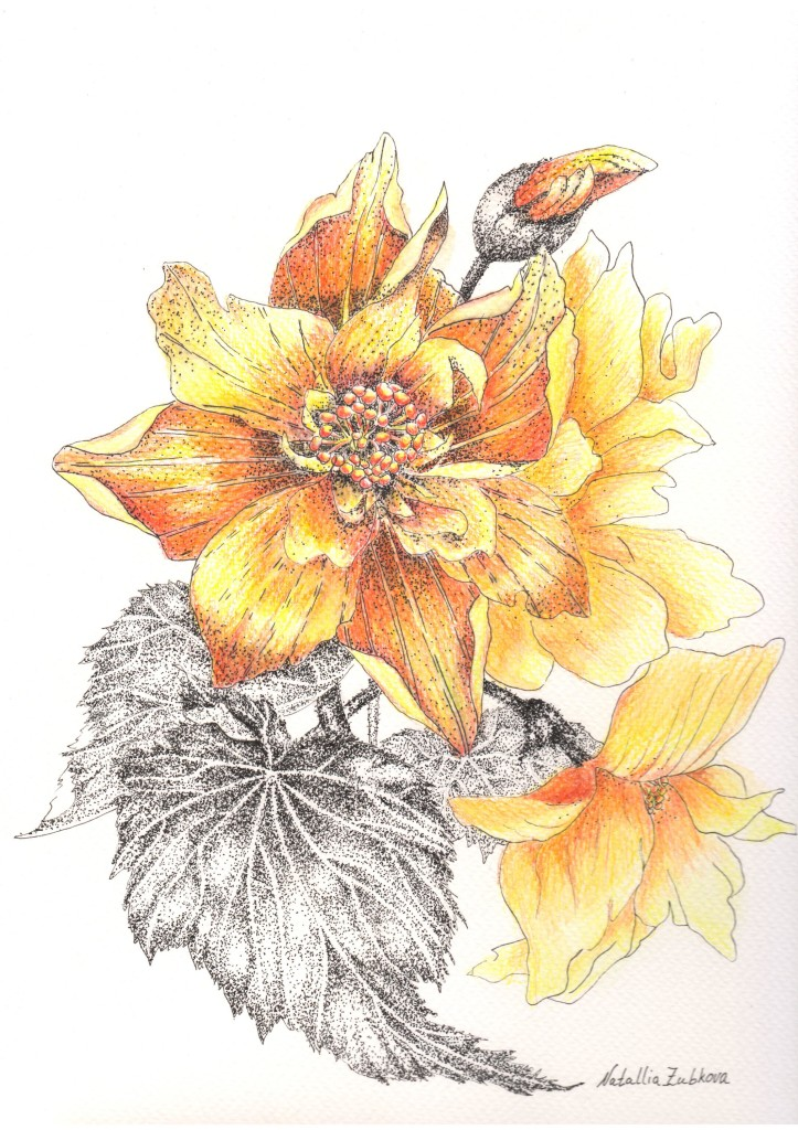 Watercolor paper 300g/m, watercolor pencils, 30.5х22.9см, 2017